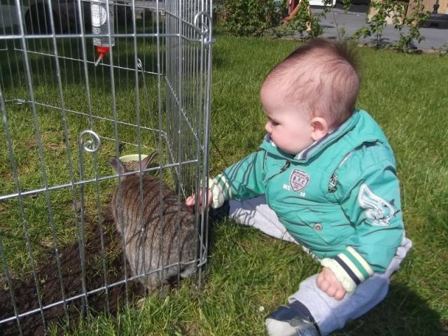 Dag lief konijn