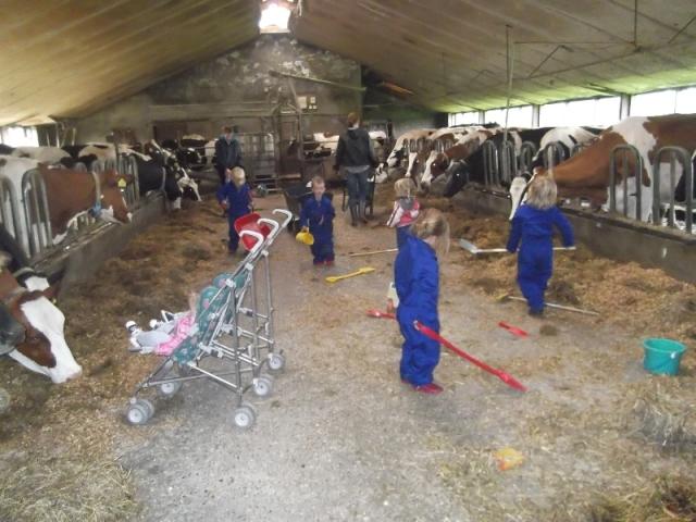 In de koeienstal