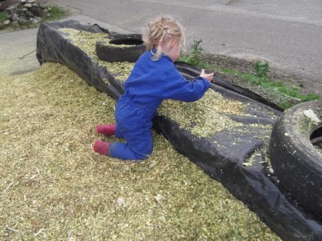 Spelen met verse mais