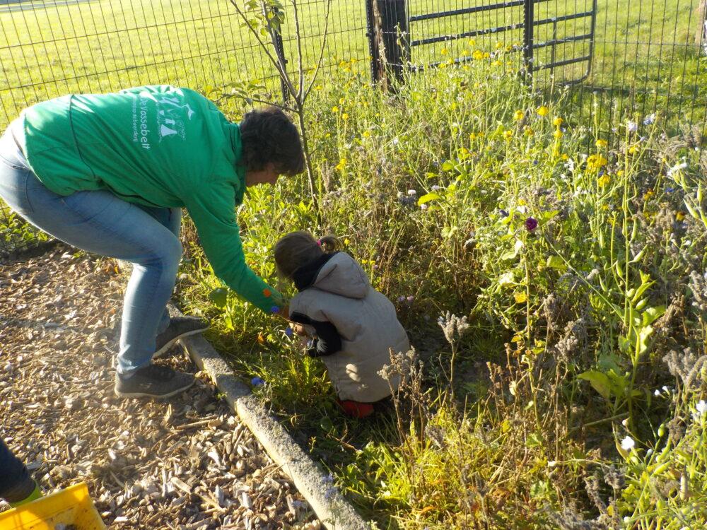 bloemen plukken pluk tuin