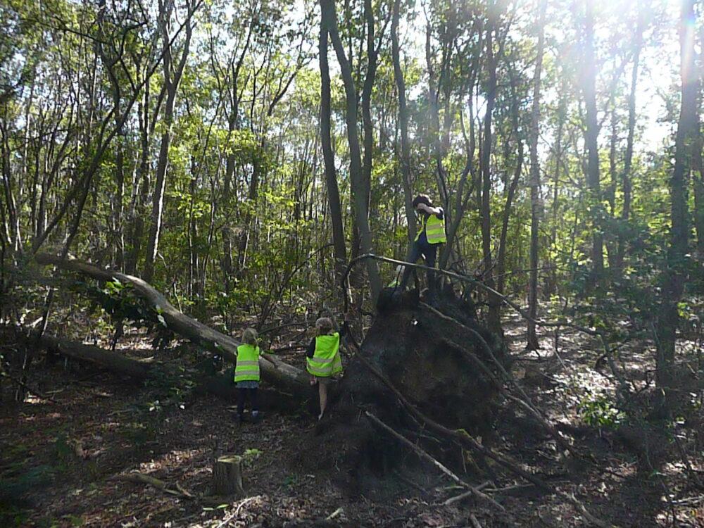 naar het bos, omgevallen boom
