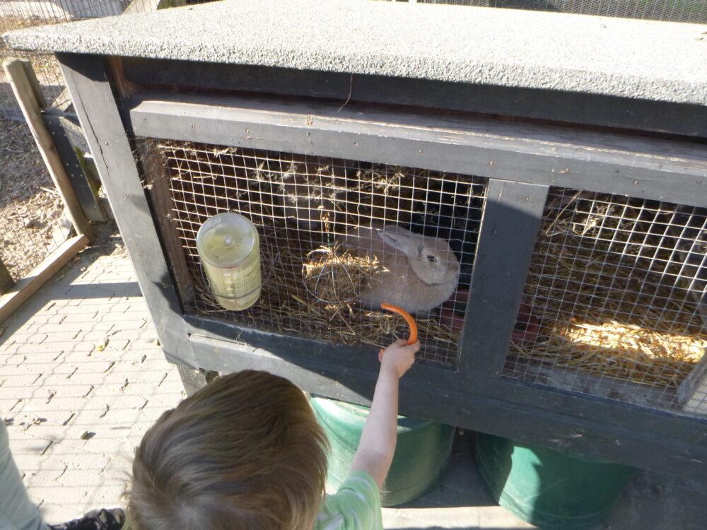 konijnen fruit voeren